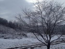 Bowhunter Winter Ungarn 2015